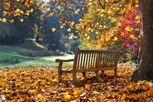 NY Sinus Center Fall  Allergies