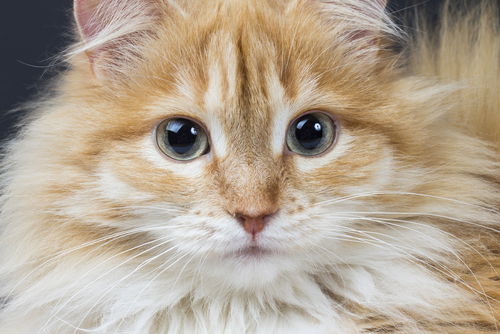 How To Get Rid Of Cat Dander From Carpet