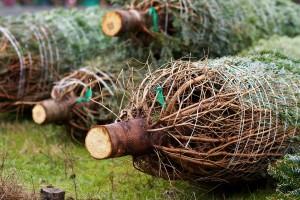 Christmas Tree Syndrome Tips