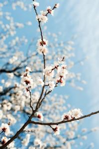 tree pollen spring