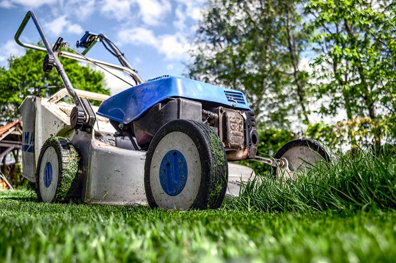 Ways to Allergy-Proof Your Lawn