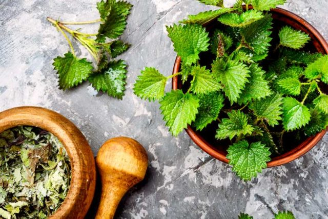 Herbs for Spring Allergies