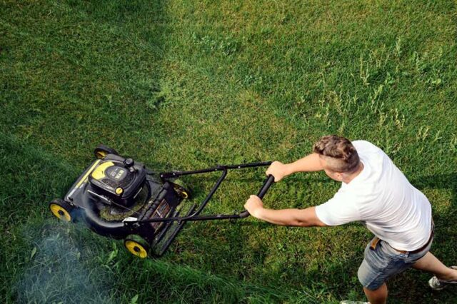 Allergy-Proof Your Yard